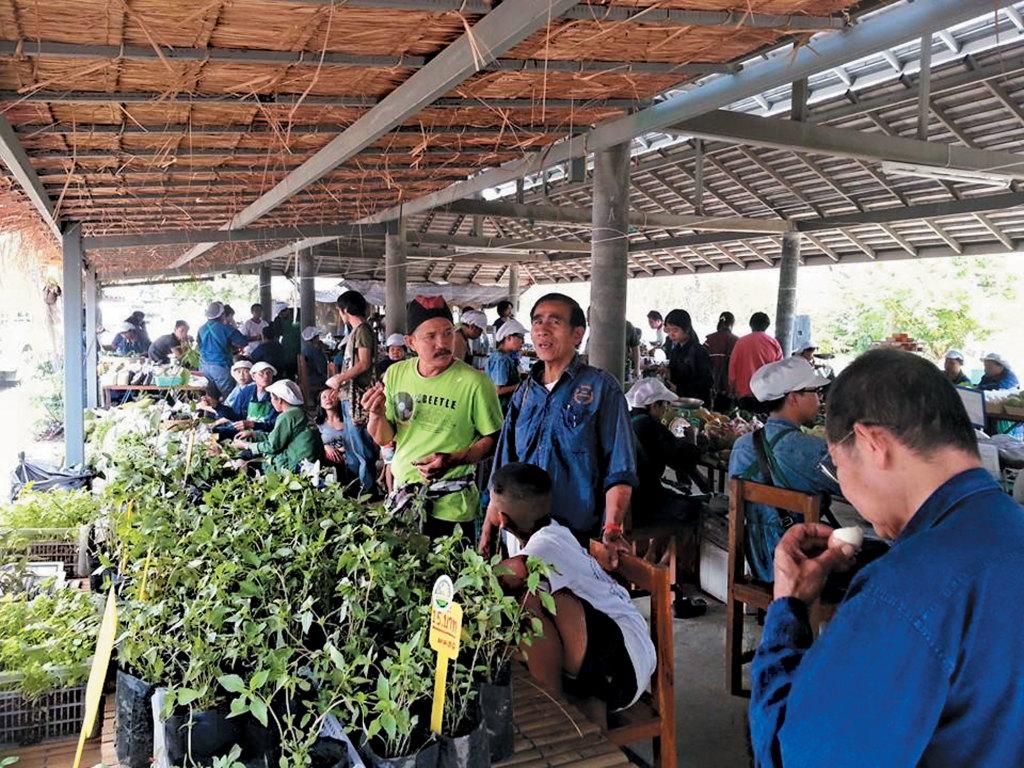 Chiang-Mai-organic-home