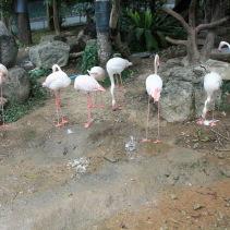 นกออกไข่ (2)
