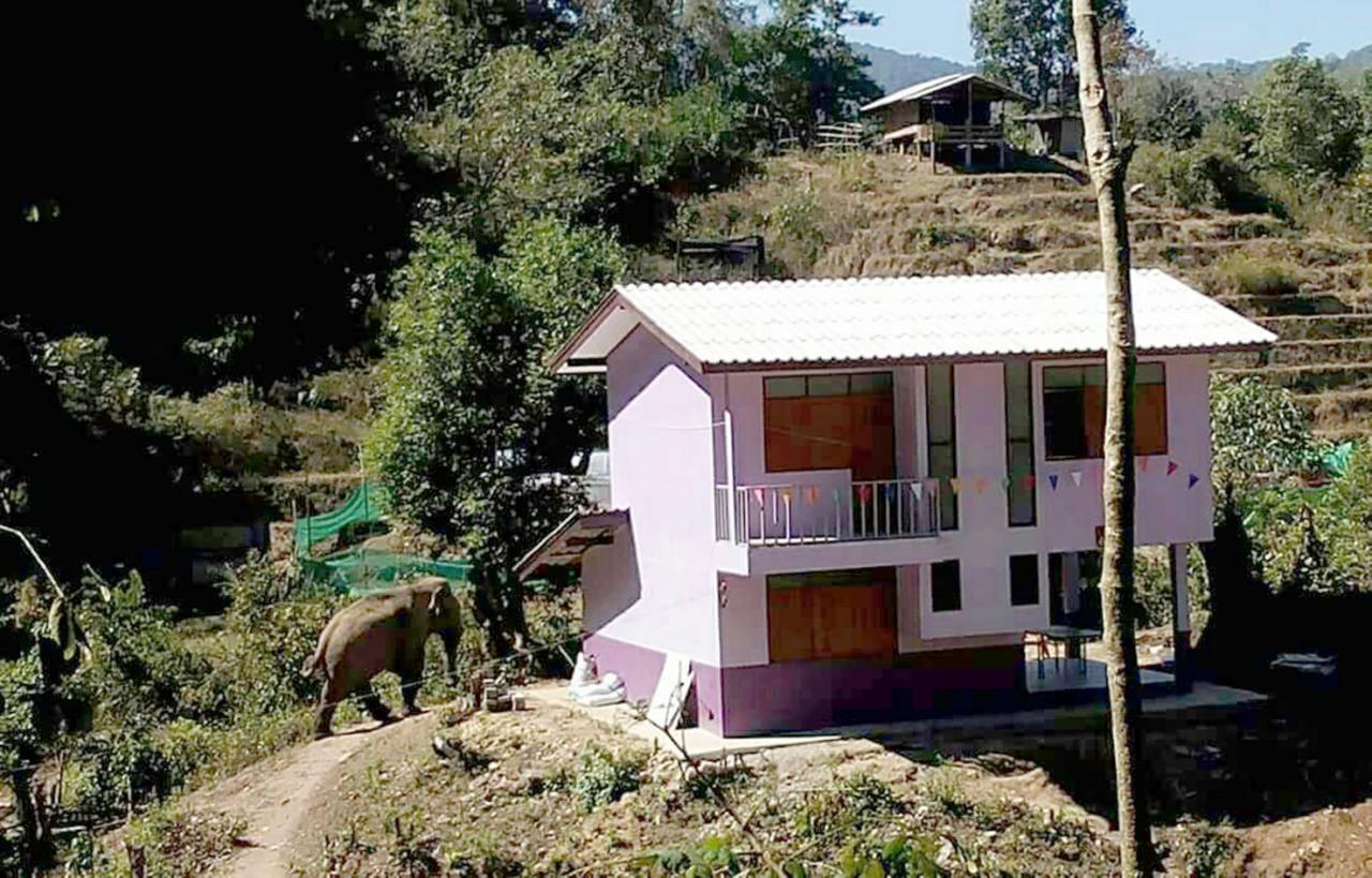 Wild Elephant Destroys School's Veg Garden