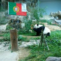 panda portugal
