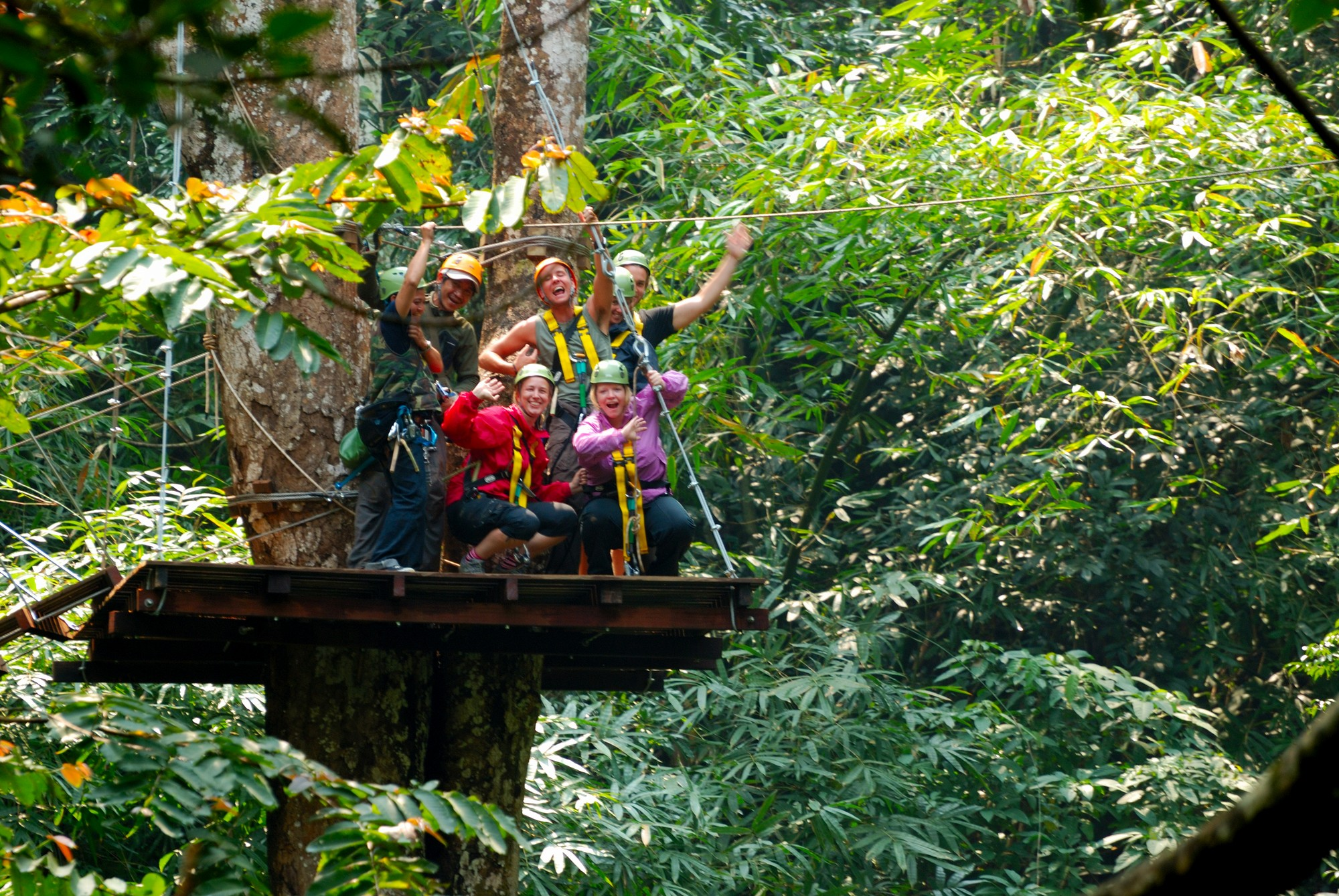 Chiang Mai CityNews - A Year of Flight of the Gibbon's ...