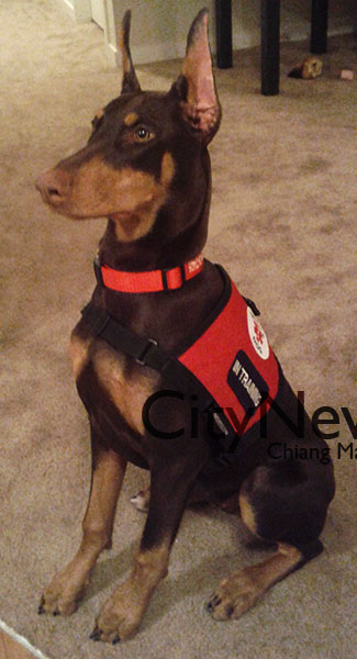Citynews Archive Doberman And Owner Raise Awareness About Service Dogs